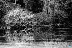 枯れ木アート