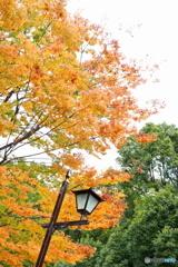 紅葉と街灯