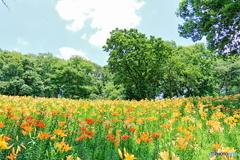 いっぱい花開いた園児達の夢