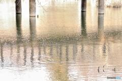 三宝寺池の橋の下