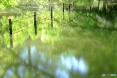 風が遊ぶ池