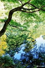 弁天池の映り込み