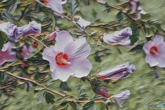 油絵風「花」