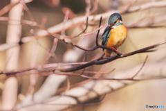 三宝寺池の翡翠