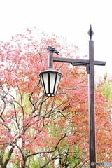 都会の秋色と街灯(紅)