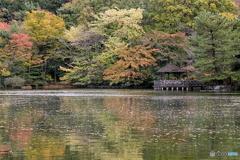 色付き始めた三宝寺池