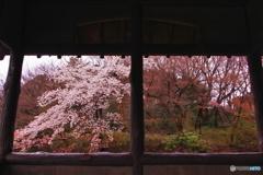 窓辺の春色