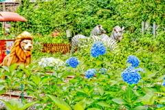 紫陽花とライオンとシマウマ