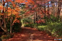 秋色の小路