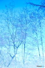 水の中の景色(立木)