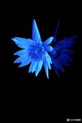飾り花睡蓮