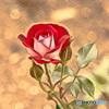 薔薇が咲く場所
