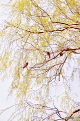 春色の中で羽を休めて