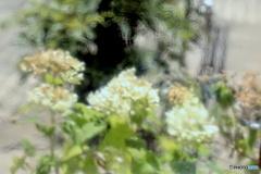 すりガラスに映り込んだ紫陽花