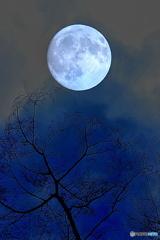 仰ぎ見る名月