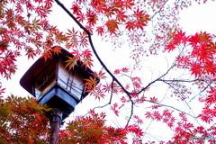 街灯とモミジ
