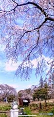 トトロの春散歩