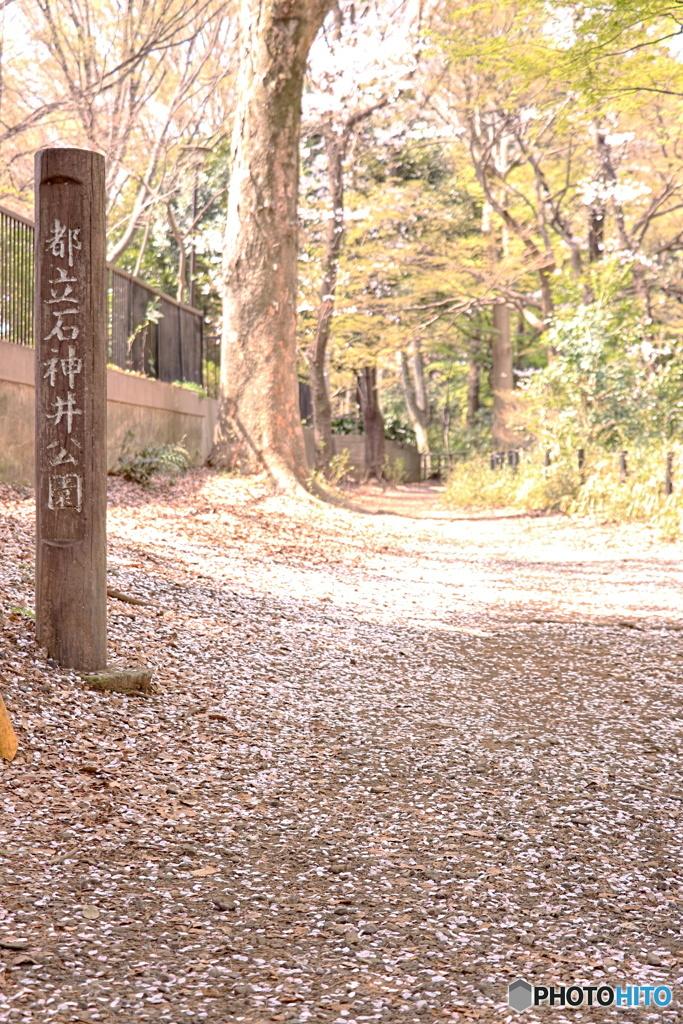 都立石神井公園