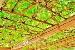 緑の葉の屋根