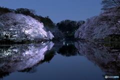 月夜の夜桜と映り込み
