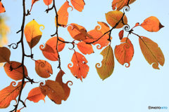 葉っぱ遊び