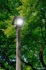 森の中の街灯(1)