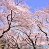 三宝寺池の春