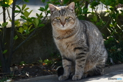 野良猫ブルース