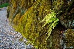シダの葉と苔石