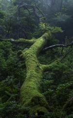久久能智の宿りし森