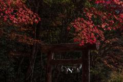 奇麗な紅葉に出会えますように…