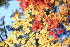秋は短いね