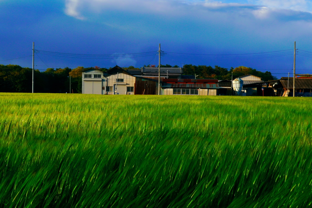 ブルーグラスな風景