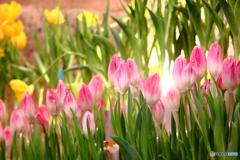 春を待つ(陽)