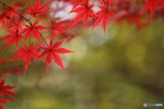 秋の彩り(2)