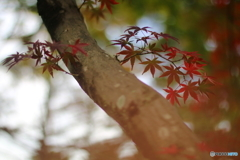紅葉の想い出