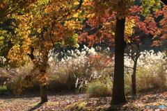 晩秋の煌き