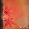 秋の彩り(1)