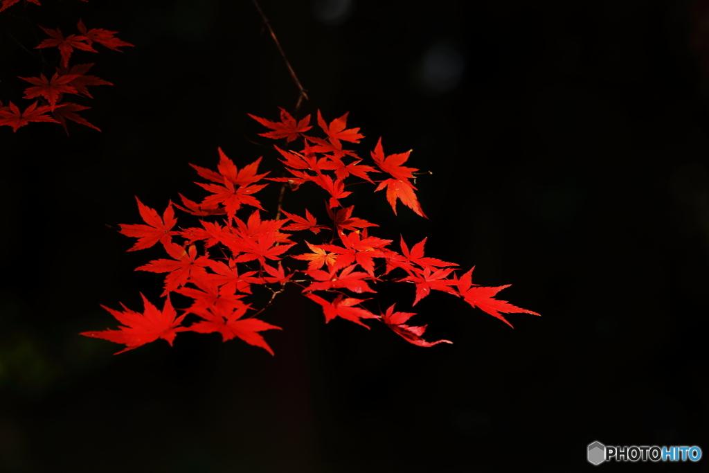 秋の彩り(3)