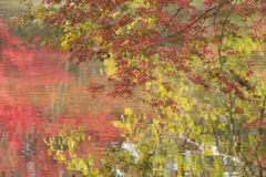晩秋の彩り(1)