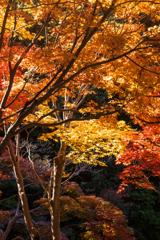 紅葉の季節(1)
