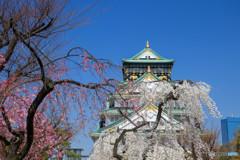 桜・大阪城