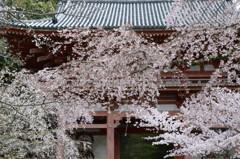 春めいて(2)