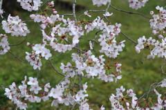 春めいて(1)