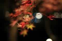 紅葉×玉ボケ