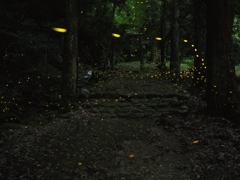 古寺への小路