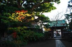 鎌倉 教恩寺