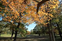 加曾利貝塚公園