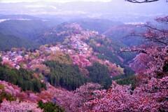 金峯山寺の眺め1