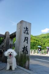 渡月橋とリプシー